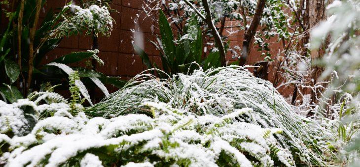 【臨時のお知らせ】雪のため本日は18時まで